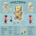 Gummi-Planche-Anatomie-Jason-Freeny-Sculpture-Geekorner thumbnail