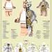 Lego-Planche-Anatomie-Jason-Freeny-Sculpture-Geekorner thumbnail