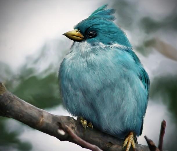natural_angrybird_glassbreaker_by_mohamedraoof-geekorner