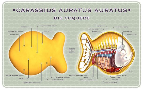 Goldfish-Cracker-Dissected-Anatomie-Jason-Freeny-Sculpture-Geekorner