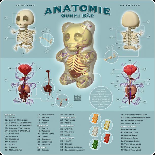 Gummi-Planche-Anatomie-Jason-Freeny-Sculpture-Geekorner