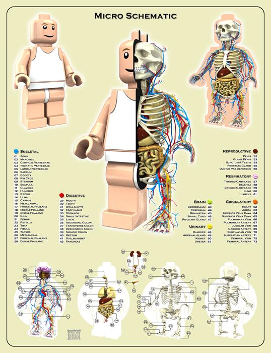Lego-Planche-Anatomie-Jason-Freeny-Sculpture-Geekorner
