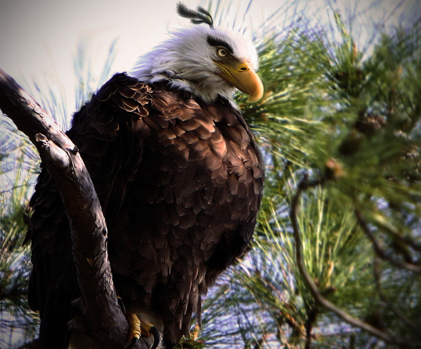 natural_angrybird_mighty_eagle_by_mohamedraoof-geekorner