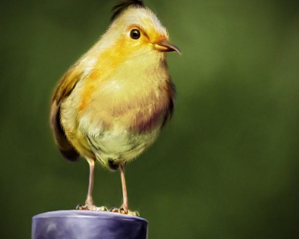 natural_angrybird_yellow_bird_by_mohamedraoof-geekorner